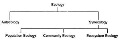 essay on ecologyecology