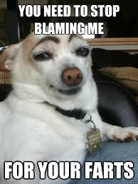 dog did it memes   quickmeme via Relatably.com