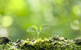 「芽」の画像検索結果