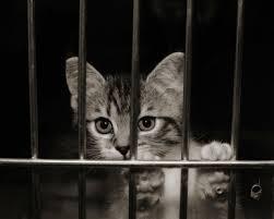 essays on animal cruelty   essay and resume    www cycleforums comessays on animal cruelty