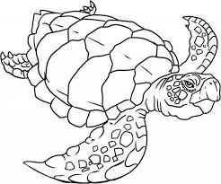 Small Picture Get This Easy Turtle Coloring Pages for Preschoolers 9iz28