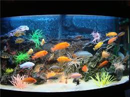 Как выбрать <b>корм для рыбок</b>?
