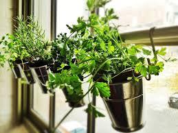 Kitchen Herb Garden Design Window Herb Garden Ikea Hack Jillm Hang Plants Without