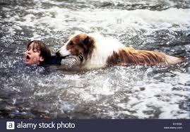 Resultado de imagem para lassie