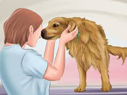 how to become a professional dog walker pictures wikihow make dogs love you