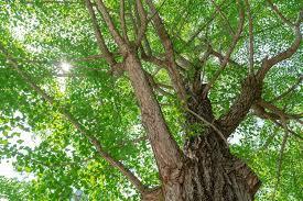 「木写真」の画像検索結果