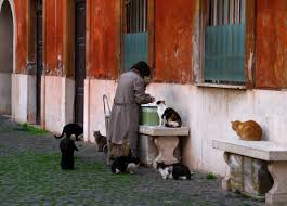 <b>Cat lady</b> - Wikipedia