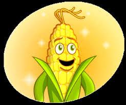 Resultado de imagem para Dia do Milho