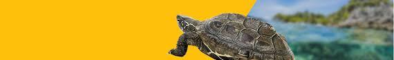 Купить корма для черепах в интернет зоомагазине Zoo61 ...