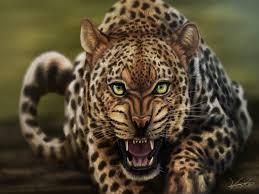 Resultado de imagem para fotos ou imagens de leopardos