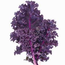 Image result for Redbor Kale