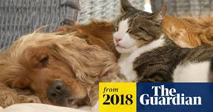 Pets at home: do <b>cats and dogs</b> really fight like <b>cats and dogs</b> ...