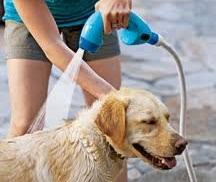 Image result for dogs shampooing