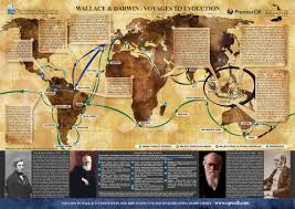 natureplus wallace tags charles darwin wallace darwin voyages to evolution map jpg