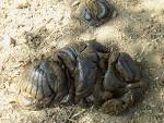 Images & Illustrations of cow dung