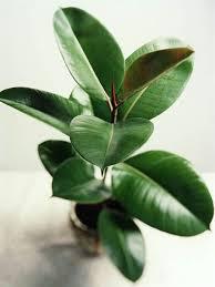 alexander walterstonegetty images best low light office plants