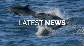<b>Dolphin</b> Project | Let's Protect <b>Dolphins</b> Together