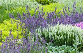 Image result for perennials