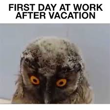 first day at work after vacation funny owl movie shady owl first day at work after vacation funny owl movie