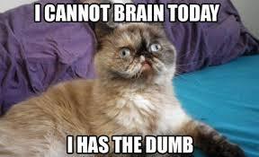 Funniest-cat-memes-of-all-time-3.jpg via Relatably.com