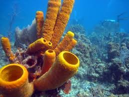 Hasil gambar untuk sponge