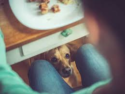 Can <b>My Dog</b> Eat This? A List of Human Foods Dogs Can and Can't Eat