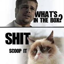 32-brad-pitt-and grumpy-cat-meme | PMSLweb via Relatably.com