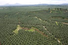 exclusive interview zurina che dir in bioeconomy s palm plantation in