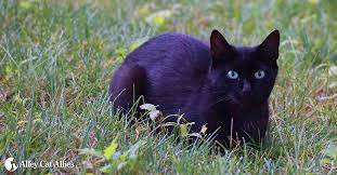 Feral & <b>Stray Cats</b>: Domestic Cats with An Important Behavioral ...