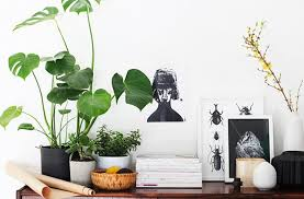 indoor plants are filling up our insta and pinterest feeds at the moment we aint complaining though theyre super cute and make our homes look gorgeous brisbane office plants