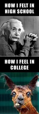 college memesLTCL Magazine via Relatably.com
