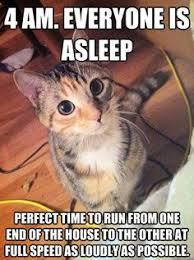 Funny Cat Memes on Pinterest | Cat Memes, Cats Humor and Funny ... via Relatably.com