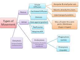 ib biology ia osmosis scribd ib biology lab osmosis essays studymode