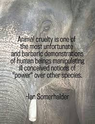 Animal quotes and animals lovers' quotes on Pinterest | Animal ...