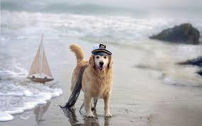Ποιοι σκύλοι τρελαίνονται για τη θάλασσα;