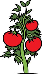 """Résultat de recherche d'images pour """"PLANTS TOMATES clipart"""""""