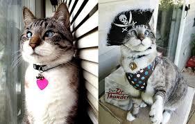 The Cutest <b>Cross</b>-<b>Eyed Cat</b> Ever [9 pics] «TwistedSifter