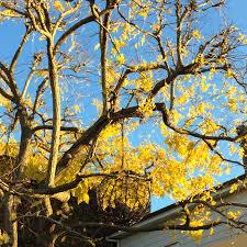 photo essay a mid autumn stroll winecakeandcheese 5310 5313 5320 5322