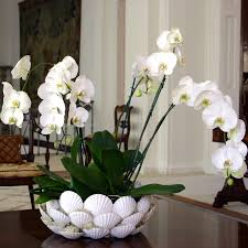 day orchid decor: home decor flowers uk white orchids delivery london uk orchid plants same day delivery london home
