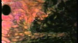 Resultado de imagem para imagens de DOS MOVIMENTOS DA TERRA, LUA, SOL