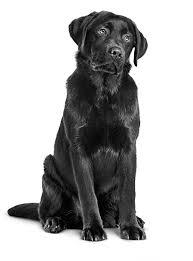 The <b>Royal Canin Gastrointestinal</b> Virtual Congress - The Webinar Vet