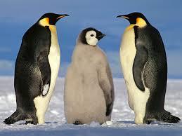 Image result for emperor penguins