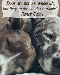 Animal Abuser Abuse Quotes. QuotesGram