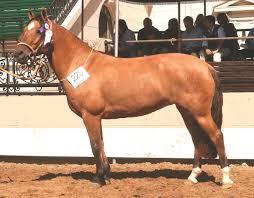 Corridas de caballos xxx. Super follada y corrida de caballo semental