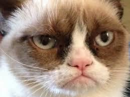 Memes Vault Angry Cat Memes Blank via Relatably.com