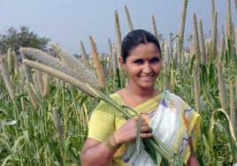 Image result for culm of millet