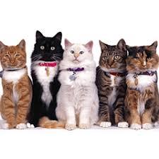 <b>Сухой</b> диетический <b>корм</b> для кошек <b>Hill's Prescription</b> Diet c/d ...