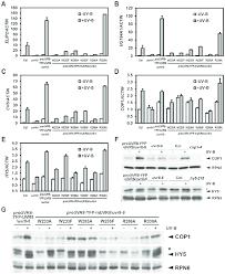 UVR8 mutations lead to abnormal <b>UV</b>-B-responsive gene expression.