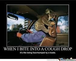 Koala Bear Memes. Best Collection of Funny Koala Bear Pictures via Relatably.com