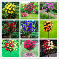 <b>Flower</b> - Shop Cheap <b>Flower</b> from China <b>Flower</b> Suppliers at good ...